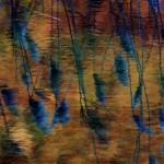 Lago di Segrino (Triangolo Lariano, Lombardia) Acqua calma acqua fredda, dove i ciuffi della Phragmites si rispecchiano effimeri contro la luce del tramonto.
