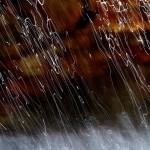 Torrente Bagnolo (Montemurlo, Toscana)Getti d'acqua si distaccano dalla parete formando un velo che, acceso dal sole in quel piccolo salto, ne disegna la caduta nel torrente.